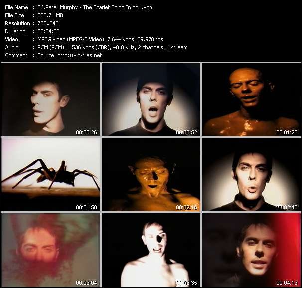 Peter Murphy video - The Scarlet Thing In You