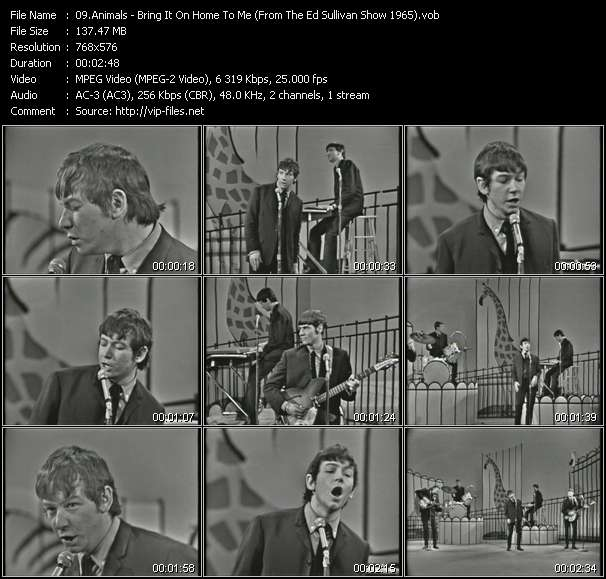 Image of: British Invasion Animals Video Bring It On Home To Me from The Ed Sullivan Show 1965 Mvfilescom Animals bring It On Home To Me from The Ed Sullivan Show 1965